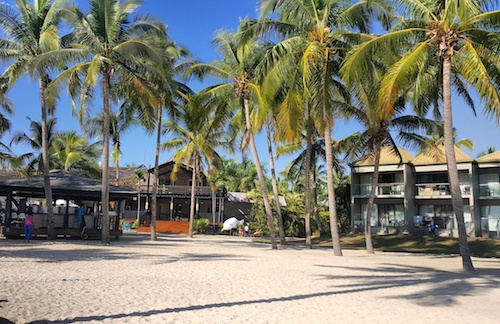 Palm Trees at DoubleTree Resort by Hilton - Sonaisali Island , Fiji